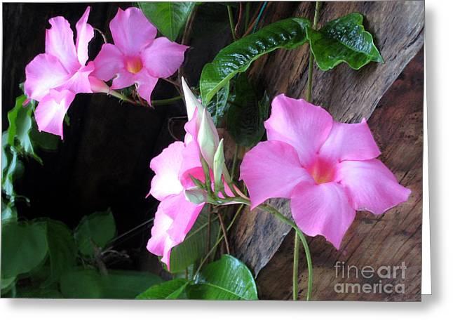 John Neville Cohen Greeting Cards - Pink Flowers Greeting Card by John Neville Cohen