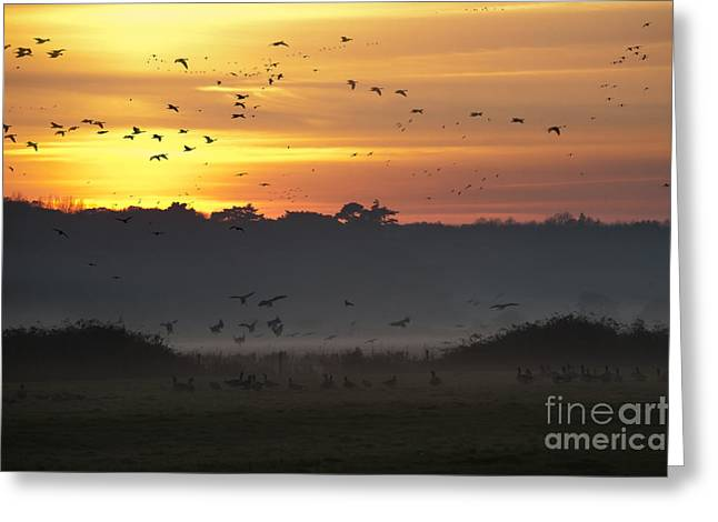 Migration Greeting Cards - Pink footed geese at Holkham Norfolk UK Greeting Card by John Edwards