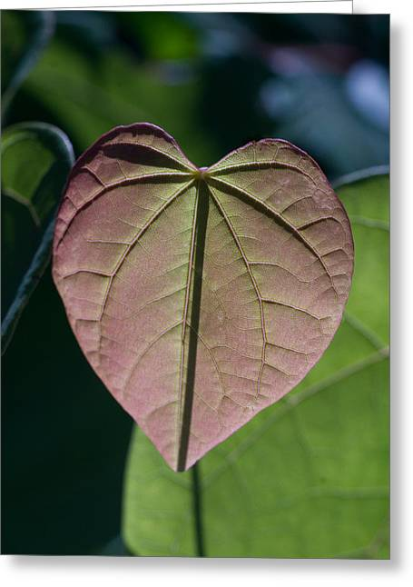 Morgan County Greeting Cards - Pink Heart Leaf Greeting Card by Douglas Barnett