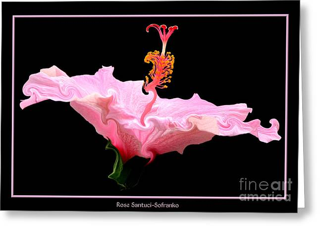 Santuci Greeting Cards - Pink Hibiscus with Curlicue Effect Greeting Card by Rose Santuci-Sofranko