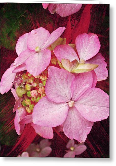 Decor Photography Greeting Cards - Pink Hydrangea Greeting Card by Cathie Tyler