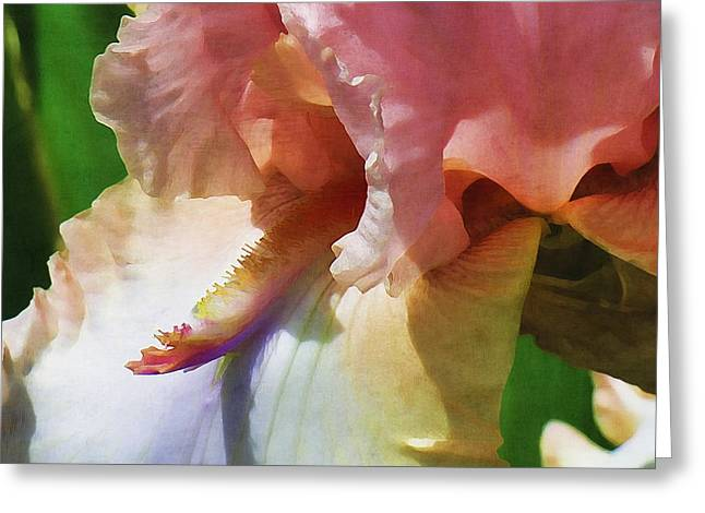 Iris Digital Art Greeting Cards - Pink Iris Greeting Card by Bonnie Bruno
