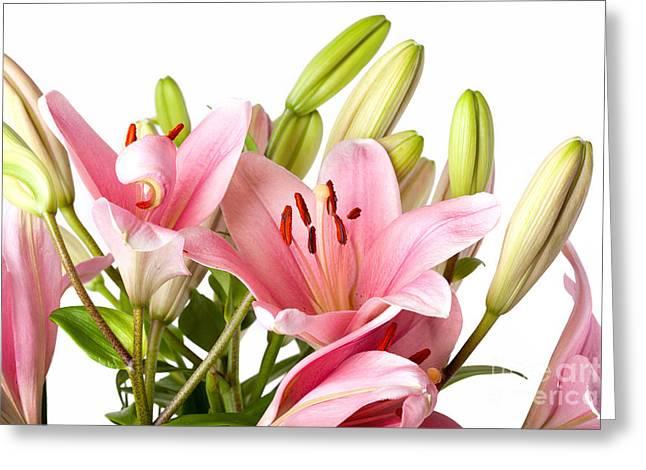 Lilium Greeting Cards - Pink Lilies 04 Greeting Card by Nailia Schwarz