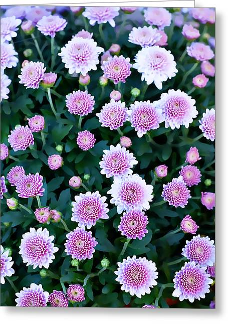 Sunflower Patch Greeting Cards - Pink Greeting Card by Malania Hammer