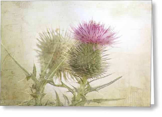 Kim Klassen Texture Greeting Cards - Pink on Green Greeting Card by Margaret Hormann Bfa