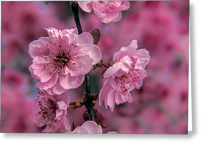Pink on Pink Greeting Card by Robert Bales
