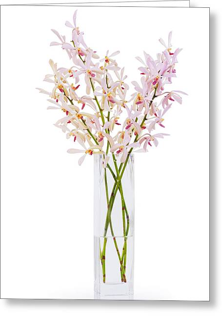 Reflex Greeting Cards - Pink Orchid In Vase Greeting Card by Atiketta Sangasaeng