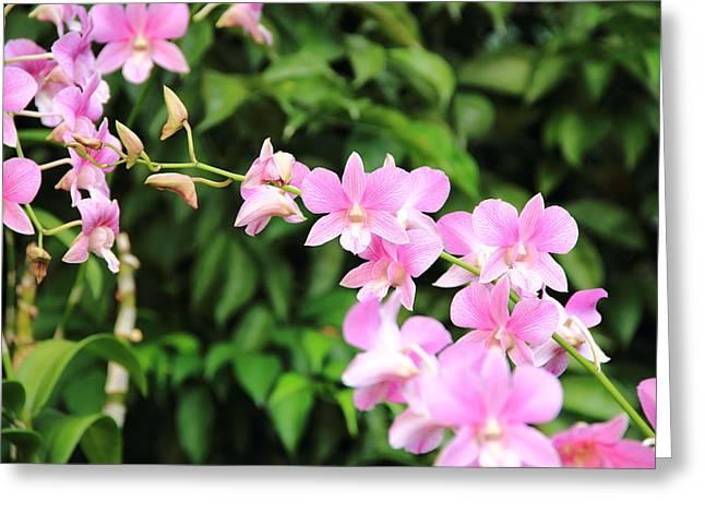 Rahul Manglekar Greeting Cards - Pink Orchid Greeting Card by Rahul Manglekar