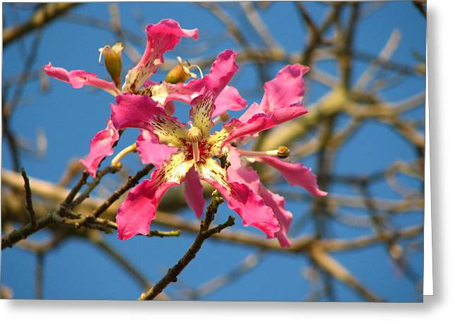 Carla Parris Greeting Cards - Pink Orchid Tree Greeting Card by Carla Parris