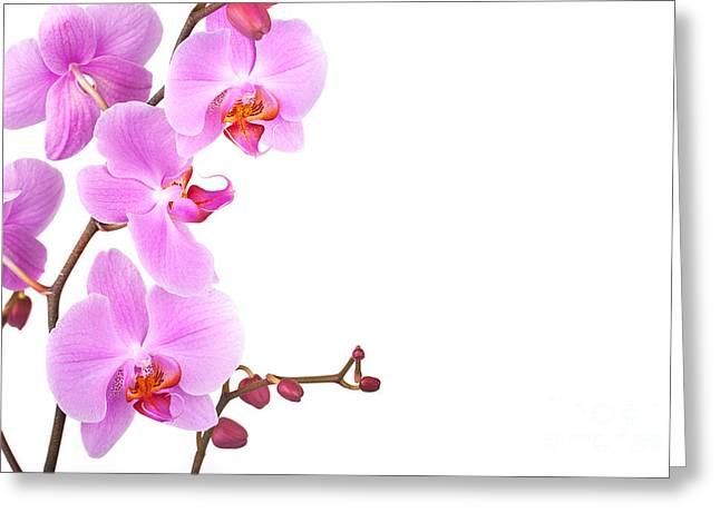 Orchid Petals Greeting Cards - Pink orchids Greeting Card by Jane Rix