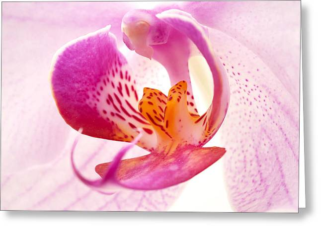Pistil Greeting Cards - Pink phalaenopsis Greeting Card by Fabrizio Troiani