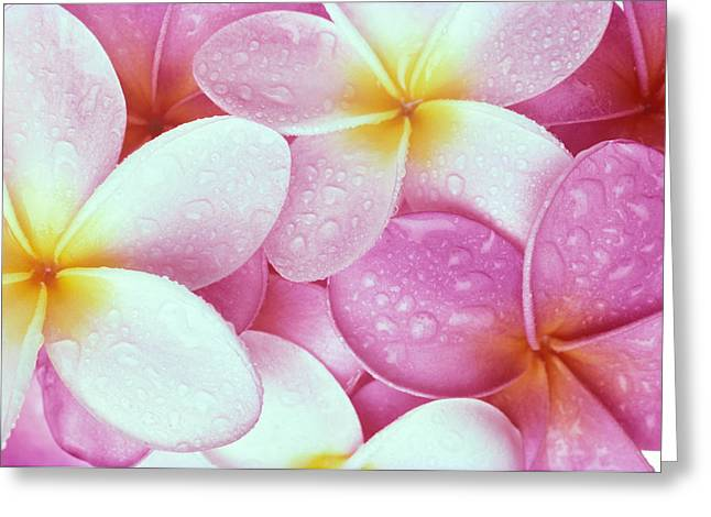 Bed Spread Greeting Cards - Pink Plumeria Greeting Card by Carl Shaneff - Printscapes