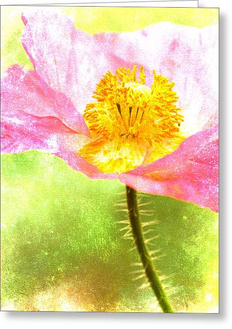 Cheerful Photographs Greeting Cards - Pink Poppy on Green Greeting Card by Carol Leigh