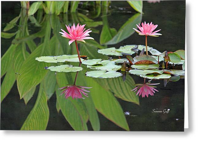 Lily Pad Greeting Cards Greeting Cards - Pink Reflections Greeting Card by Suzanne Gaff