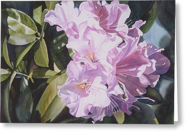 Pink Blossoms Greeting Cards - Pink Rhododendron Greeting Card by Sharon Freeman