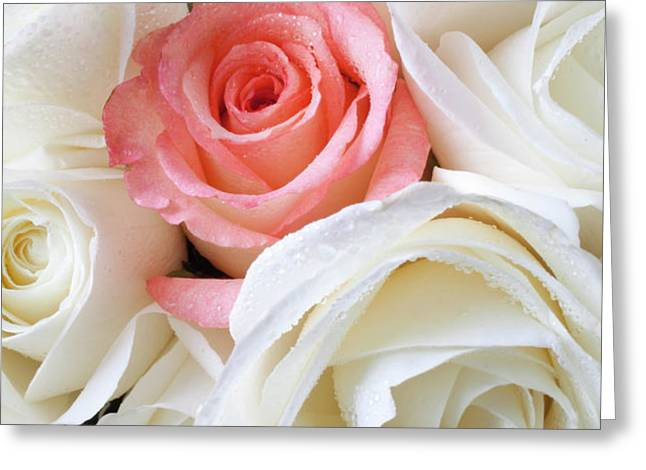 Pink rose among white roses Greeting Card by Garry Gay