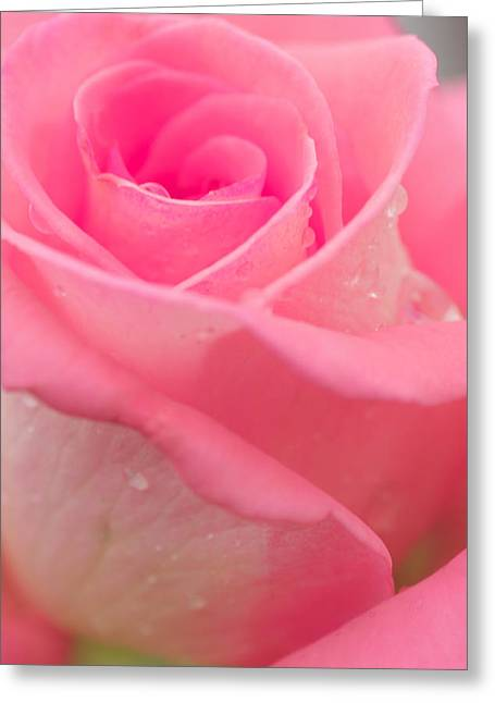 Occasion Greeting Cards - Pink Rose Greeting Card by Atiketta Sangasaeng