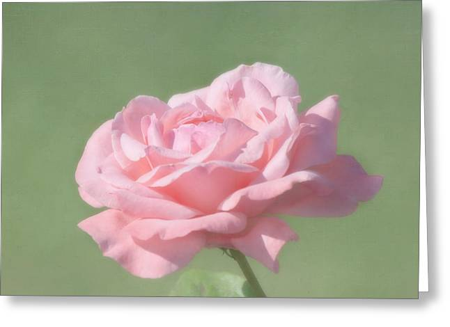 Close Focus Floral Greeting Cards - Pink Rose Greeting Card by Kim Hojnacki
