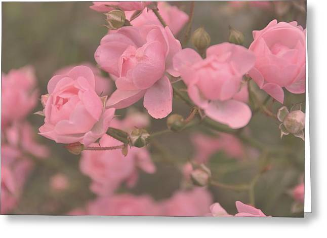 Floral Photographs Pyrography Greeting Cards - Pink Roses Greeting Card by Paula Sharlea