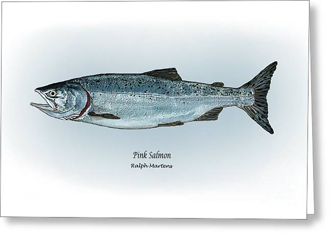 Salmon Drawings Greeting Cards - Pink Salmon Greeting Card by Ralph Martens