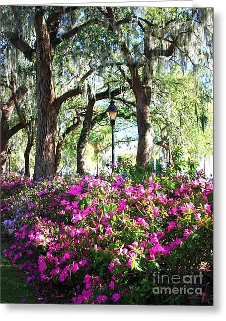 Savannah Parks Gardens Greeting Cards - Pink Savannah Azaleas Greeting Card by Carol Groenen