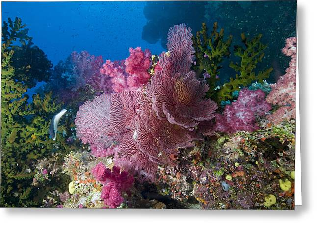 Sea Animals Greeting Cards - Pink seafan cluster Greeting Card by Freund Gloria