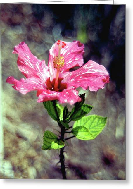 Kevin W. Smith Greeting Cards - Pink Speckled Hibiscus Greeting Card by Kevin Smith