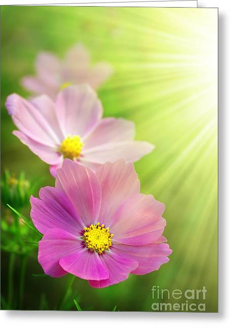 Germinate Greeting Cards - Pink Spring Greeting Card by Carlos Caetano
