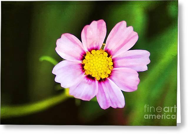 Alone Digital Art Greeting Cards - Pink Sunshine Greeting Card by Darren Fisher