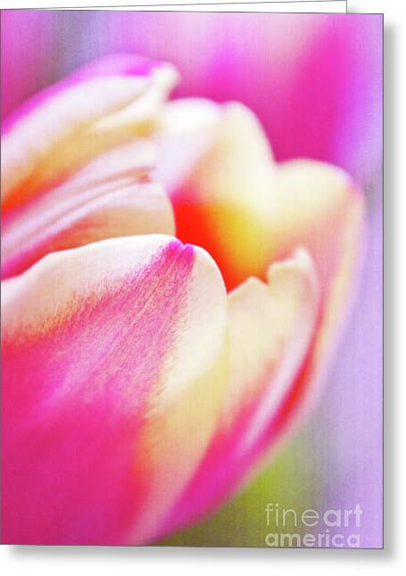 Decorativ Photographs Greeting Cards - Pink Tenderness Greeting Card by Angela Doelling AD DESIGN Photo and PhotoArt