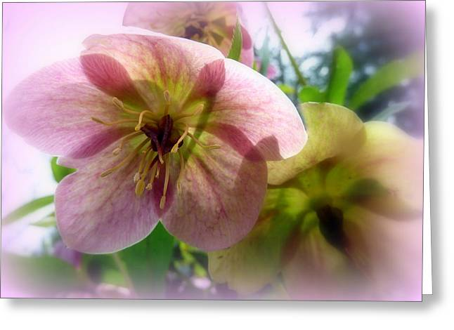 Translucence Greeting Cards - Pink Translucence Greeting Card by Cindy Wright