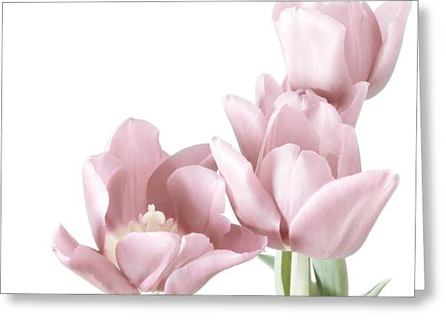 Close Up Floral Photographs Greeting Cards - Pink Tulips Greeting Card by HD Connelly