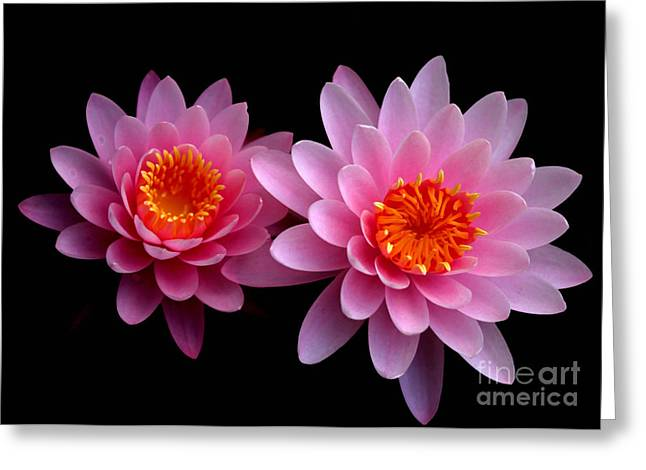 Hawaiian Pond Greeting Cards - Pink Twins Greeting Card by Sabrina L Ryan