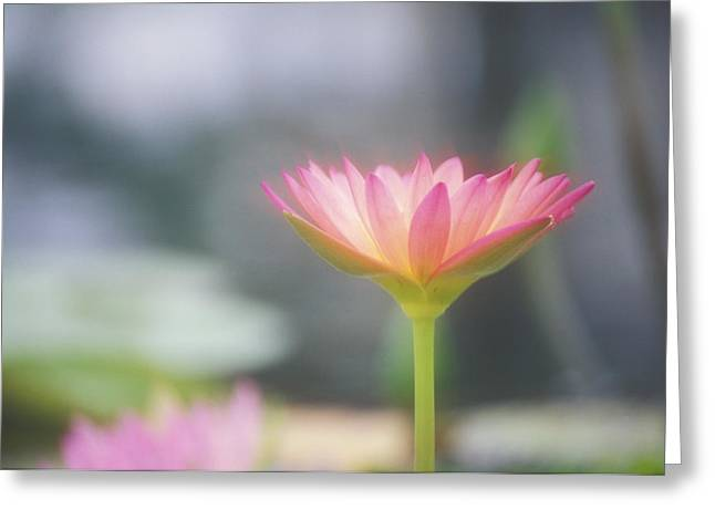 Waterlily Stamen Greeting Cards - Pink Water Lily Greeting Card by Ron Dahlquist - Printscapes