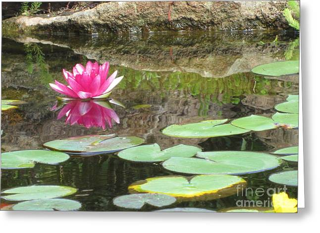 Lilly Pad Greeting Cards - Pink Waterlilly  Greeting Card by Laurianna Taylor