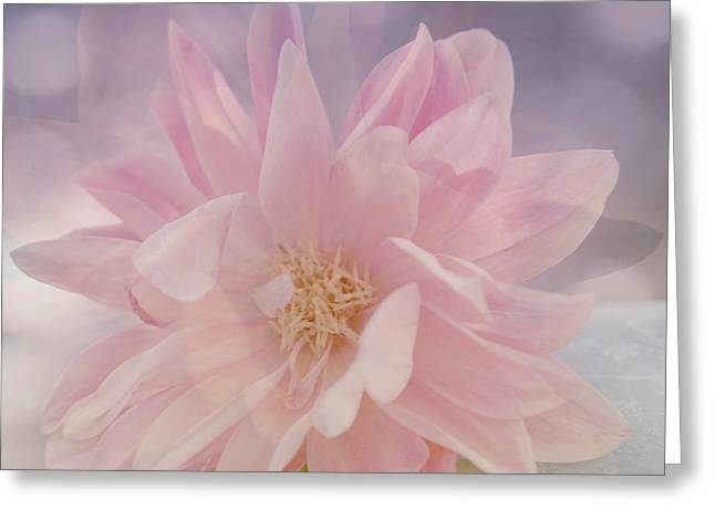 Rose Photos Greeting Cards - Pink Whisper Greeting Card by Bonnie Bruno