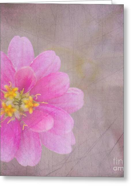 Floral Photographs Greeting Cards - Pink Zinnia Greeting Card by Betty LaRue