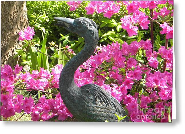 Pinkness of a Bird Greeting Card by Kimberlee Weisker