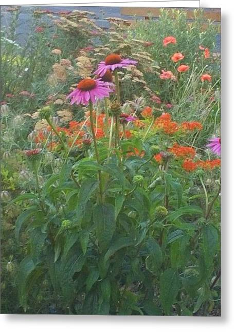 Pinkviolet Dasies With Garden Flowers Greeting Card by Thelma Harcum