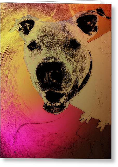Dog Abstract Greeting Cards - Pit Bull Passion Greeting Card by Bill Cannon