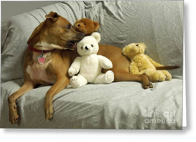 Apbt Greeting Cards - Pit Bull With Her Teddy Bears Greeting Card by Renee Trenholm