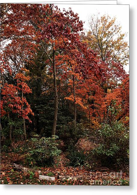 Photos Of Autumn Greeting Cards - Place of Beauty Greeting Card by John Rizzuto