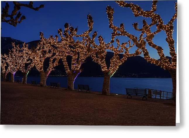 Plane Trees Greeting Cards - Plane Trees At Christma Greeting Card by Joana Kruse
