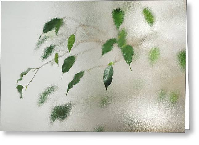 Vague Greeting Cards - Plant behind glass Greeting Card by Matthias Hauser