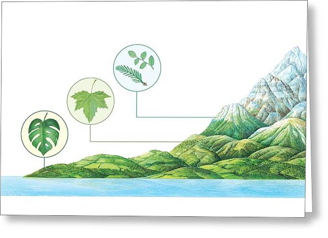 Plant Communities, Artwork Greeting Card by Gary Hincks