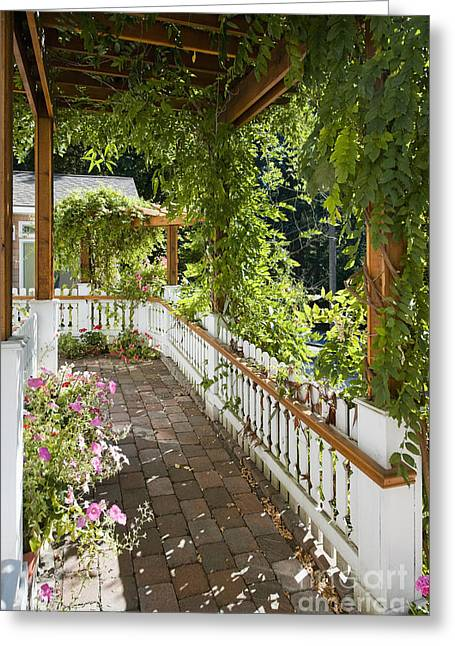 Trellis Greeting Cards - Plant-Covered Walkway Greeting Card by Andersen Ross