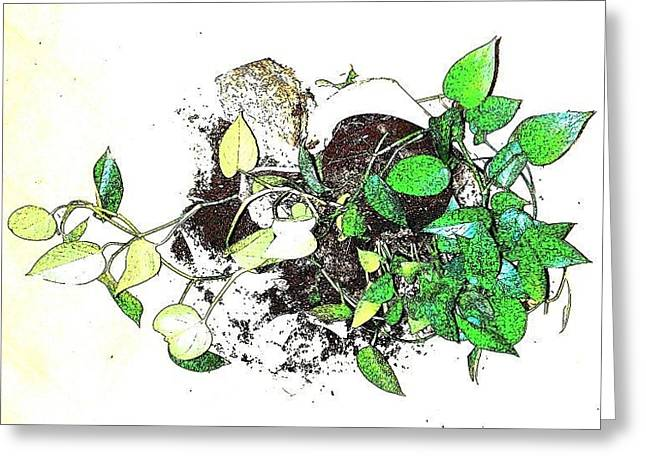 Broken Vase Greeting Cards - Plant Falls Greeting Card by YoMamaBird Rhonda