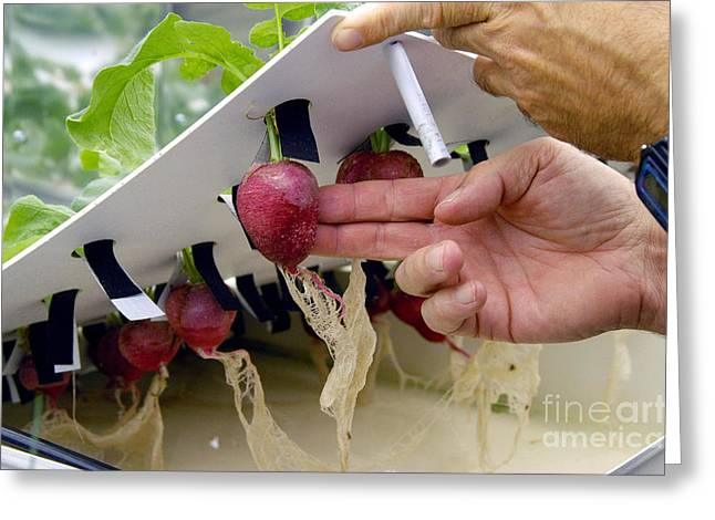 Plant Physiology Greeting Cards - Plant Growth Chamber, Ksc Space Life Greeting Card by Nasa