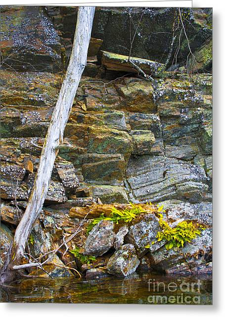 Clean Water Greeting Cards - Plant Life on Rocky Canadian Lake Shore Greeting Card by Gordon Wood
