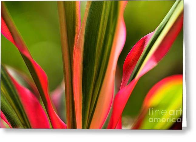 Creativ Greeting Cards - Plant Study in Red-Green Greeting Card by Heiko Koehrer-Wagner